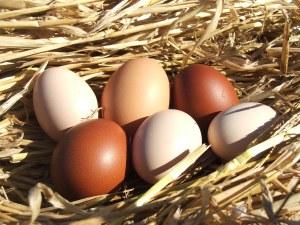Eggs at Hunters Lodge