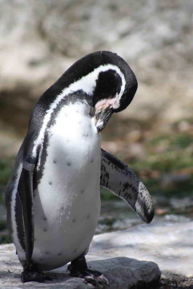penguin, www.fionadillon.com