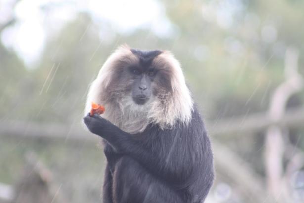 fota wildlife, www.fionadillon.com