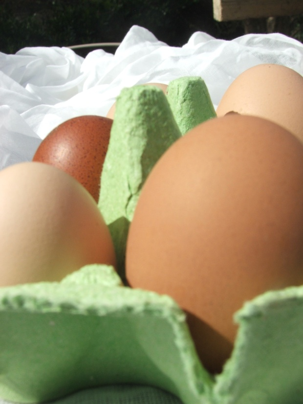 Eggs (10)