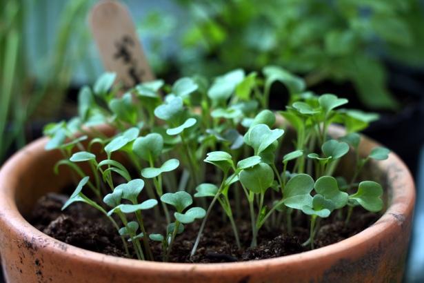 Salad Pot