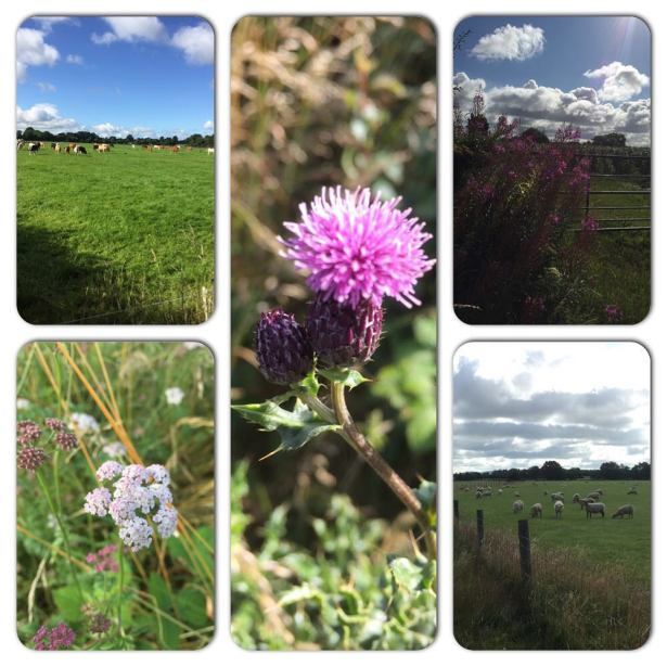 Walking in the countryside really helps me think..