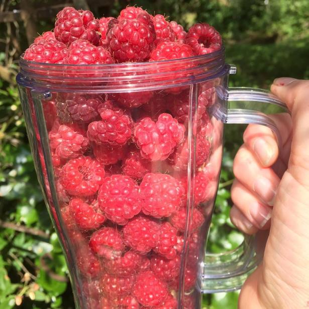 Raspberries July 2015